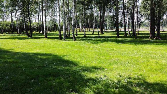 Miškelio apželdinimas Kaniukuose